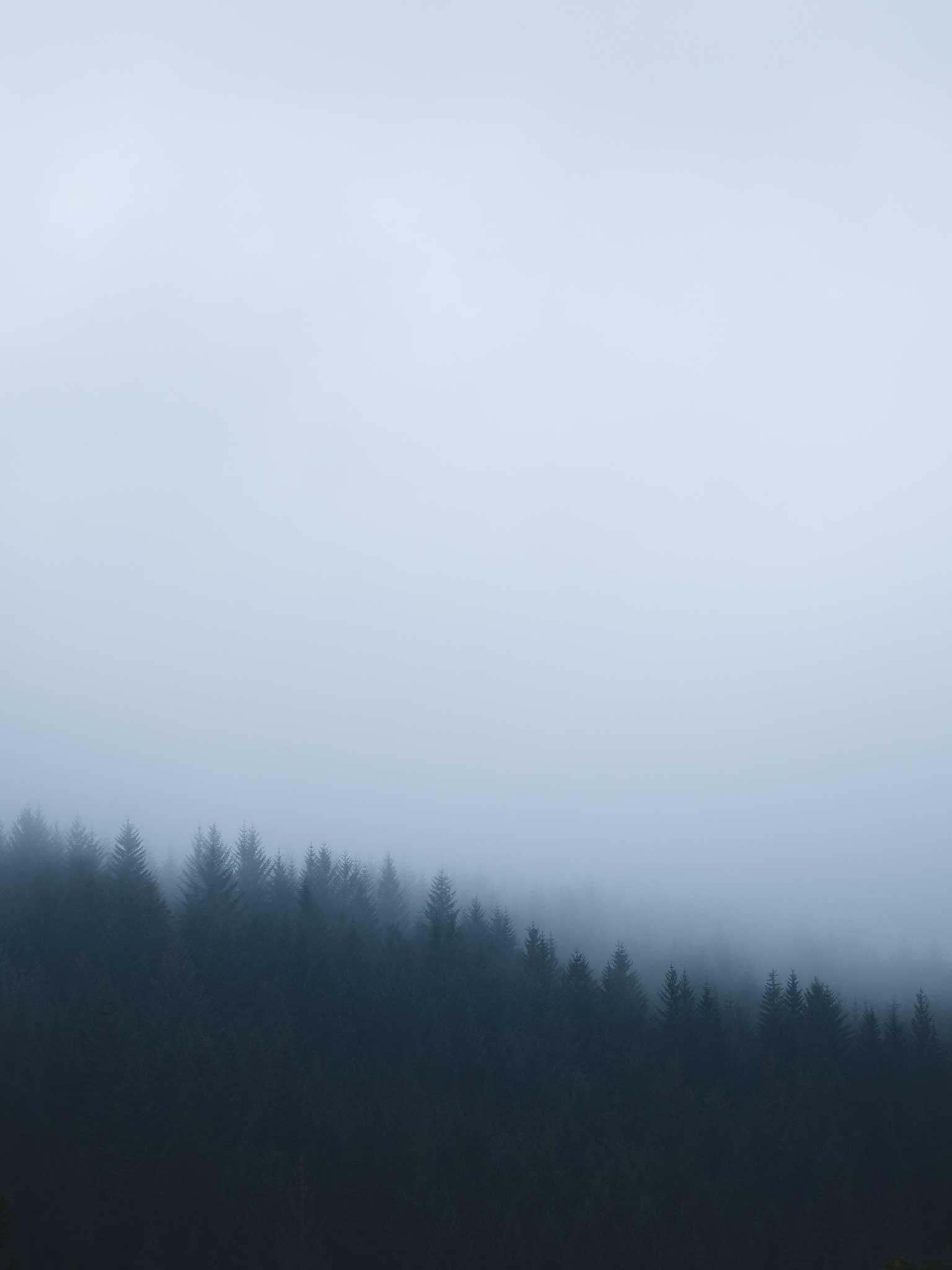 Border Mist MSP0003
